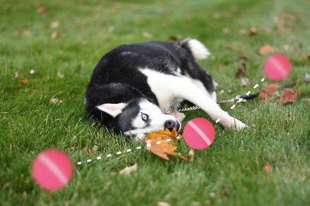 Peppy Pet Ball is a Robotic Toy Made to Keep Your Dog Active and Happy